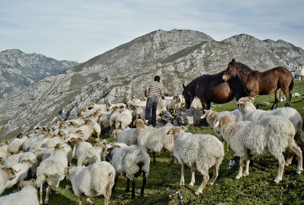 rafael-con-ovejas